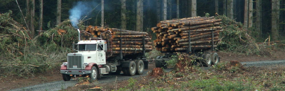 Forest landowners take the long view.  They plant and then tend their timber crop for 30 to 50 years before they harvest.
