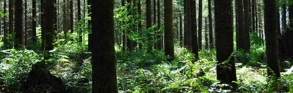 Douglas-fir forests of western Washington are among the most productive in the world.