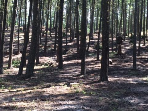 Manastash after PCT: commercial thin next
